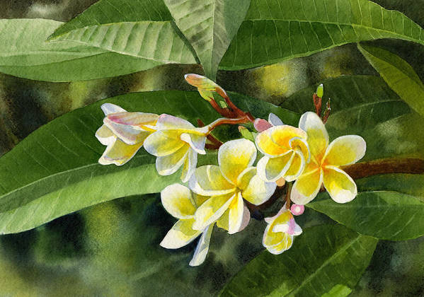 Fragipani Art Print featuring the painting Plumeria Blossoms by Sharon Freeman