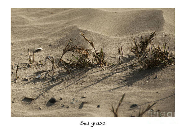 Sea Grass In The Sand Art Print featuring the photograph Sea Grass by Artist and Photographer Laura Wrede