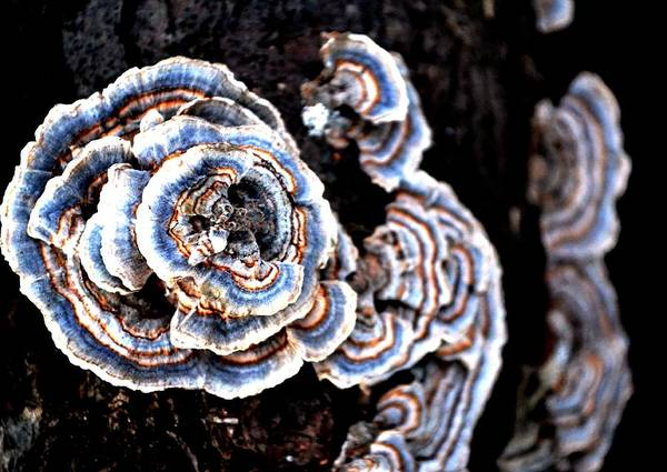 Fungi Art Print featuring the photograph Surprising II by Carlee Ojeda
