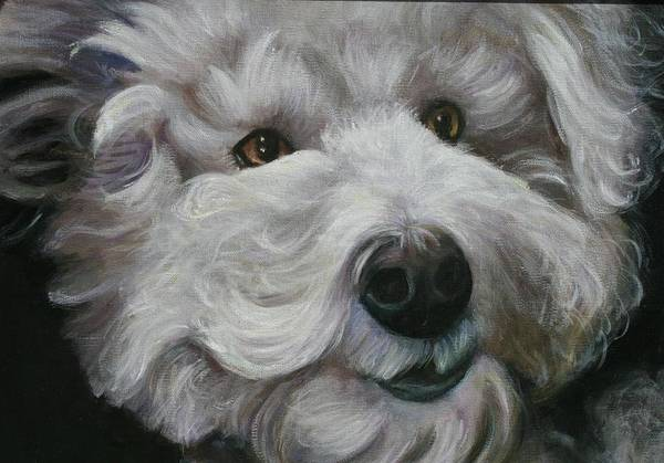Dogs Art Print featuring the painting Teddy The Bichon by Melinda Saminski