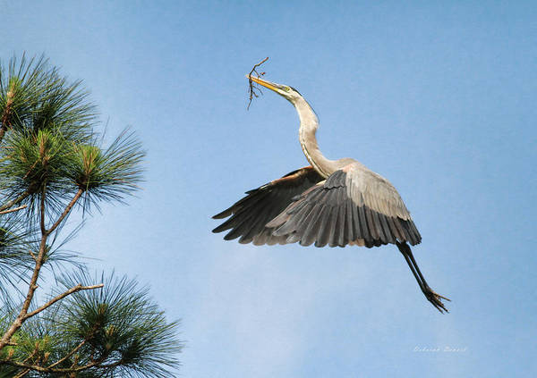 Blue Heron Art Print featuring the photograph Up To The Nest by Deborah Benoit