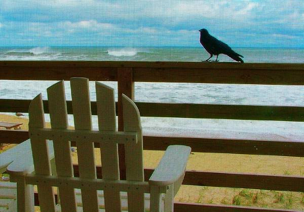 Blackbird Print featuring the photograph Watching The Waves by Julie Dant