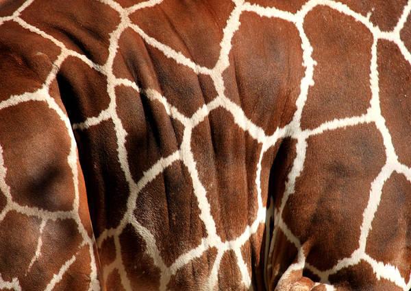 Giraffe Art Print featuring the photograph Wildlife Patterns by Aidan Moran