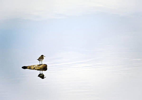 Bird; Blue; Clouds; Country; Digital Art; Mel; Muleshoe; Muleshoe Nwf; National Wildlife Reserve; Nature; Photographs; Photography; Photos; Playa; Prints; Sandpiper; Scenes; Scenic; Sky; Texas; Weather Art Print featuring the photograph Alone - Just The Two Of Us by Melany Sarafis
