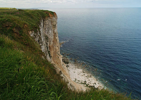 Cliffs Art Print featuring the photograph Bempton Cliffs 4 by Steve Watson