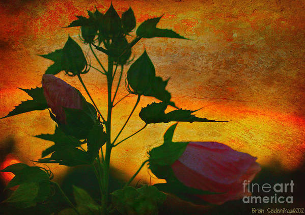 Flowers Art Print featuring the photograph Floral Contrast by Brian Seidenfrau