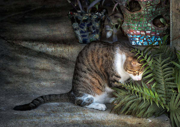 Cat Art Print featuring the photograph Focus by Brenda Bryant