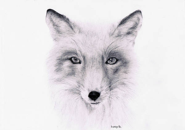 Fox Print featuring the drawing Fox by Lucy D