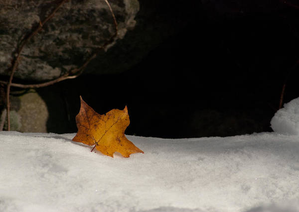 October Snow Fall Art Print featuring the photograph Lone Leaf by Tobey Brinkmann