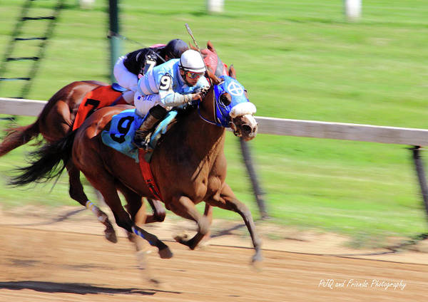 Thorougbred Race Horse Print featuring the photograph 'my Gal Sunday' On Wednesday by PJQandFriends Photography