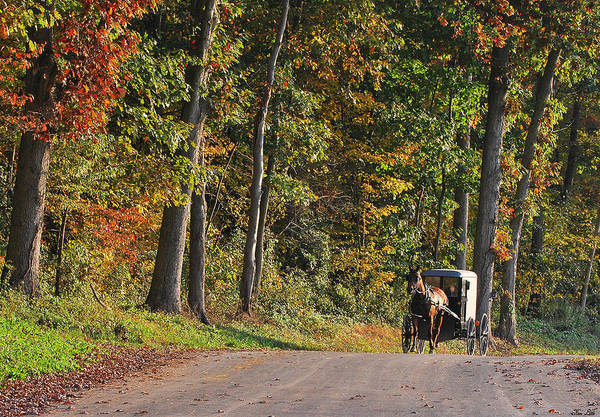 Amish Art Print featuring the photograph On Our Way by Kimberly Little
