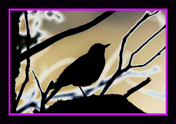 Still Life With Bird Art Print featuring the photograph Robin In Oaks by Susanne Still