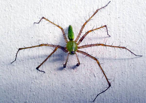 Spider Art Print featuring the photograph Spider by Dennis Hofelich