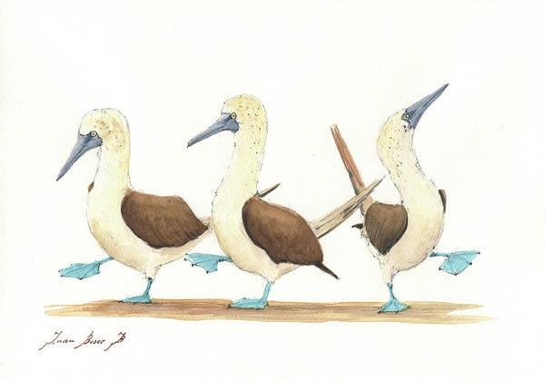 Bird Drawing Art Print featuring the painting Three Blue Footed Boobies by Juan Bosco