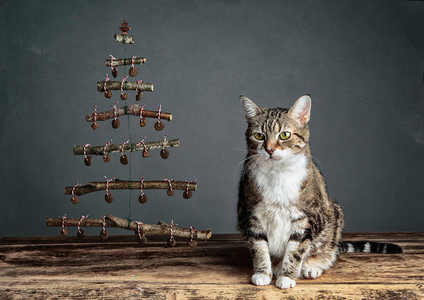 Cat Art Print featuring the photograph Cat Christmas by Nailia Schwarz