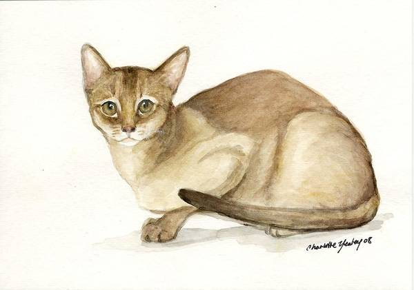Cat Art Print featuring the painting Absyssinian Cat by Charlotte Yealey