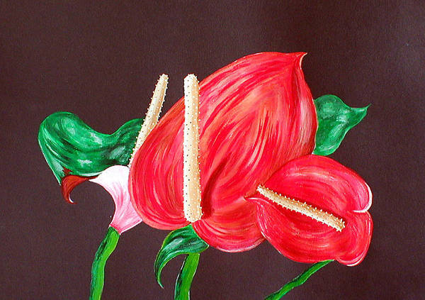 Anthurium Art Print featuring the painting Anthurium by Sandy Wager