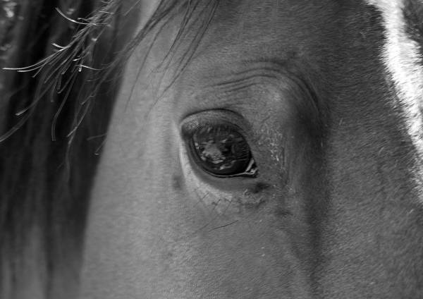 Horse Art Print featuring the photograph Beauty Is In The Eye by Heather S Huston