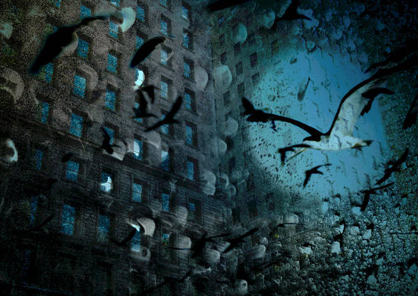 Digital Photography Art Print featuring the photograph Birds And Building by Tony Wood