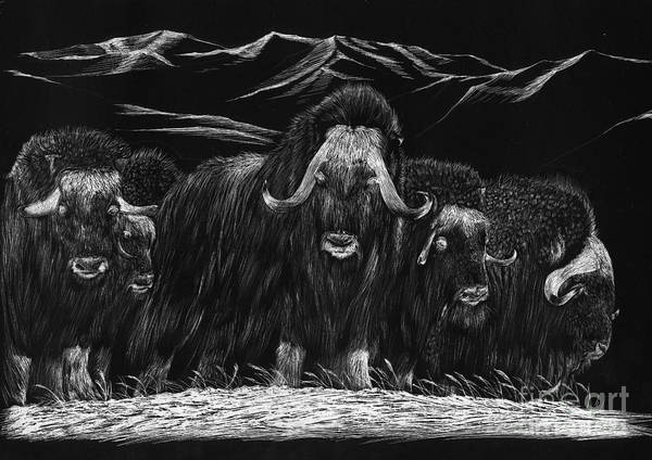 A Herd Of Bisons Gather On A Snowy Plane- Scratch Board Art Print featuring the painting Bisons by Mui-Joo Wee