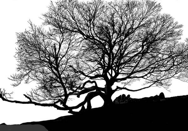 Black Birch Art Print featuring the photograph Black Birch Silhouette 2009 07 by Jim Dollar