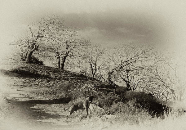Boxer Dog Print featuring the photograph Campo Dog by Kenton Smith
