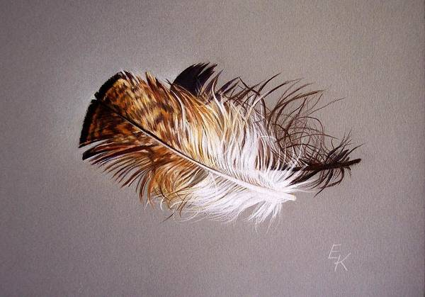 Still Life Art Print featuring the drawing Feather And Shadow 2 by Elena Kolotusha