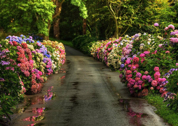 Road Art Print featuring the photograph Flower Road by Svetlana Sewell