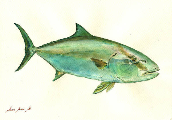 Common Dentex Art Print featuring the painting Greater Amberjack Fish by Juan Bosco