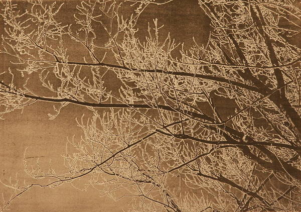 Branches Art Print featuring the painting Ice Storm Branches - Black by Michelle Miron-Rebbe