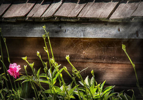 Suburbanscenes Print featuring the photograph Insect - Spider - Charlottes Web by Mike Savad