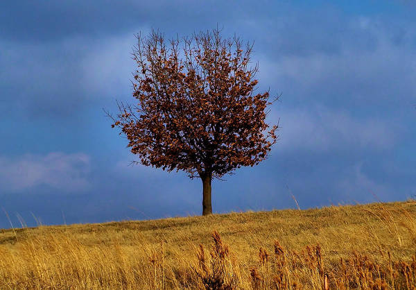 Tree Art Print featuring the photograph Just One by Karen M Scovill