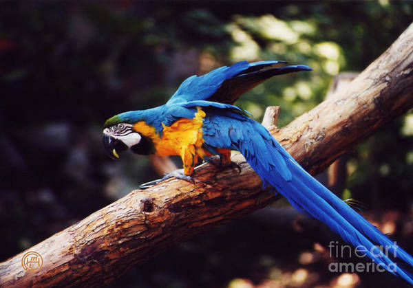 Animal Wildlife Art Print featuring the photograph Macaw by Helena M Langley