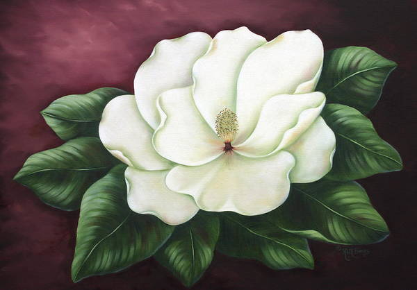 Flower Art Print featuring the painting Magnolia by Ruth Bares