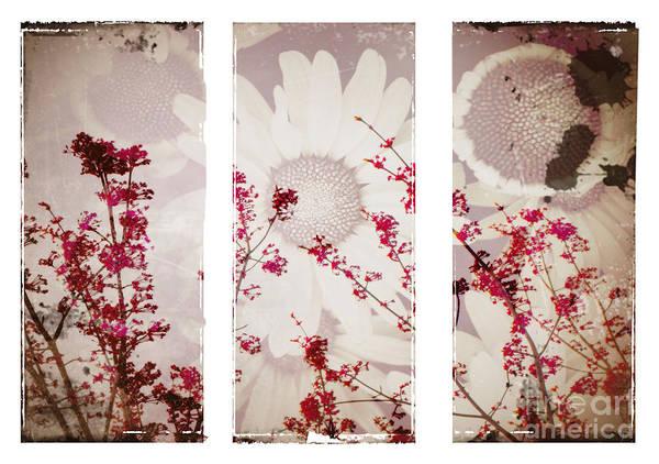 Flowers Art Print featuring the photograph New Beginnings by Tara Turner