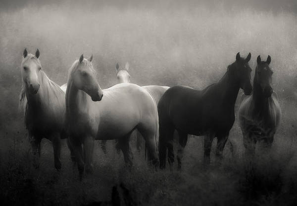 Horse Print featuring the photograph Out Of The Mist by Ron McGinnis