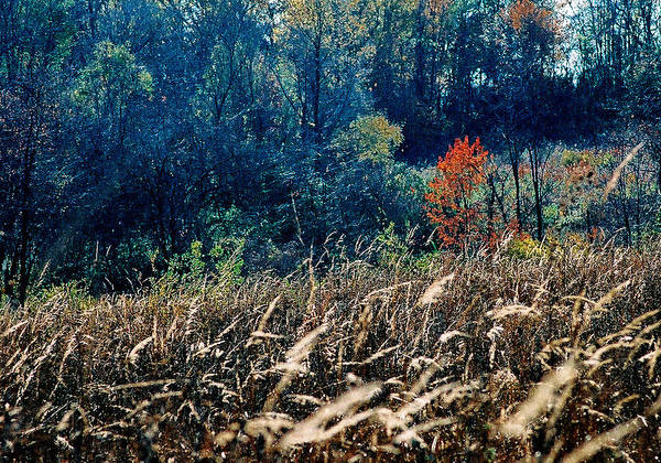 Landscape Art Print featuring the photograph Prairie Edge by Steve Karol