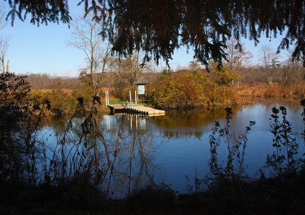 Landscape Art Print featuring the photograph Ramshorn Dock In Autumn by Larry Federman