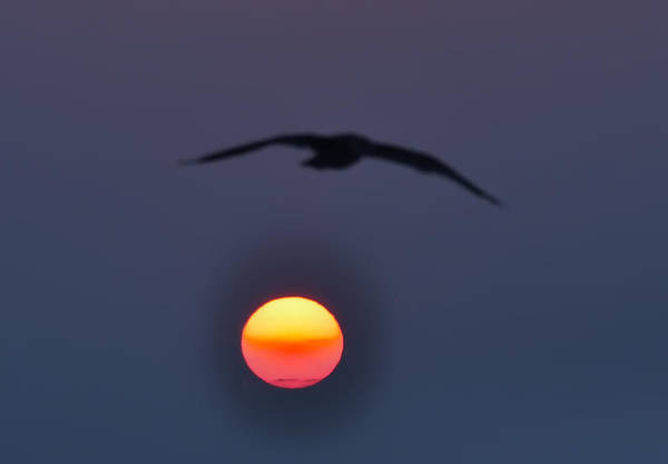Atlantic City Art Print featuring the photograph Seagull Sun by Bill Cannon