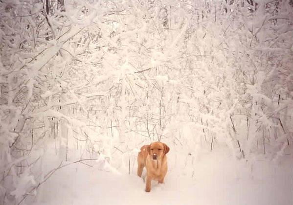 Winter Art Print featuring the photograph Shamee by Kathy Schumann