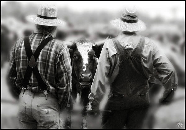 Ox Art Print featuring the photograph The Conversation by Wayne King