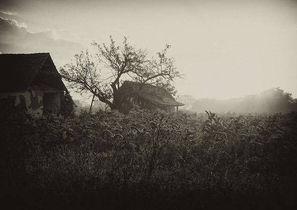 House Art Print featuring the photograph The Old House by Svetlana Peric