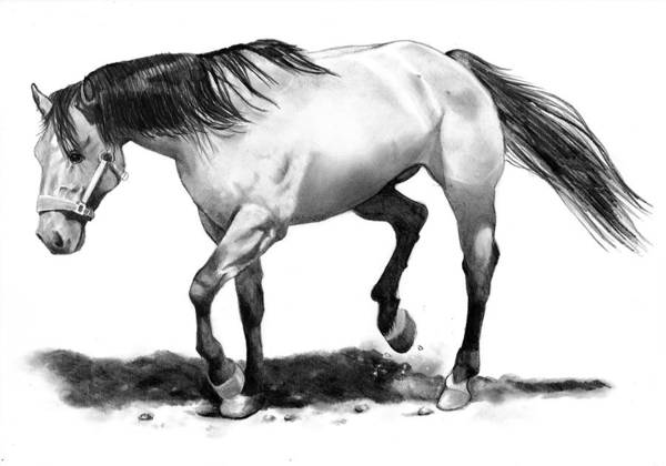 Horse Art Print featuring the drawing The Stallion by Joyce Geleynse