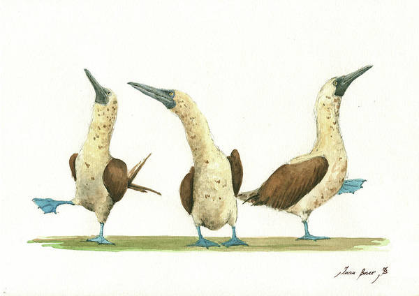 Three Blue Footed Boobies Art Print featuring the painting Three Blue Footed Boobies by Juan Bosco