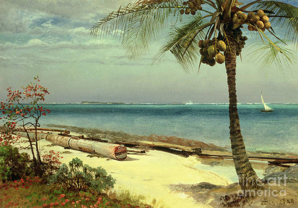 Shore; Exotic; Palm Tree; Coconut; Sand; Beach; Sailing Print featuring the painting Tropical Coast by Albert Bierstadt