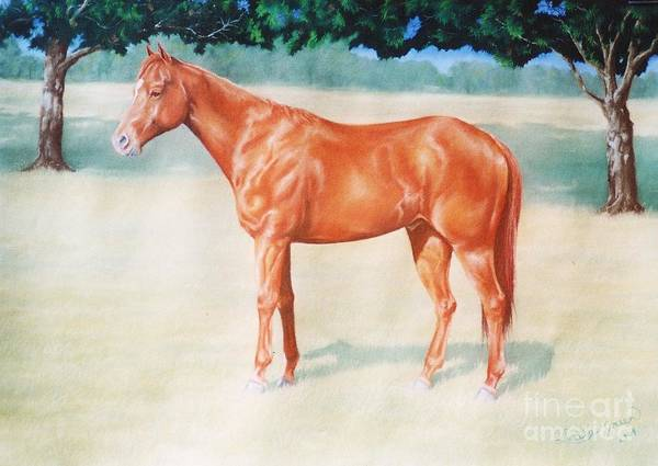Chestnut Quarter Horse Gelding Equine Pastel Art Print featuring the pastel Tully by Louise Green
