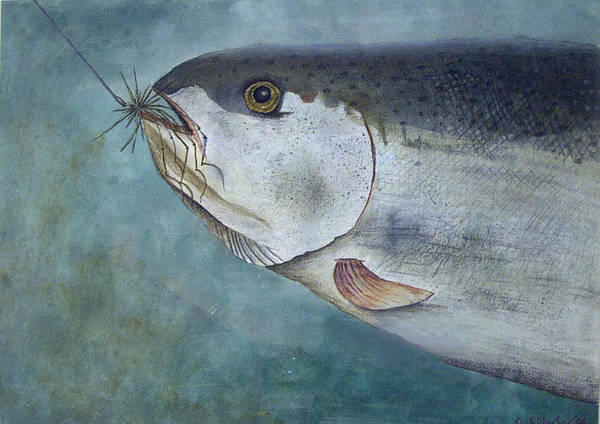 Fish Art Print featuring the painting What's For Dinner by Scott Plaster