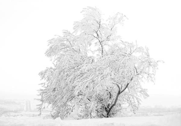 Snow Art Print featuring the photograph White On White by Marilyn Hunt