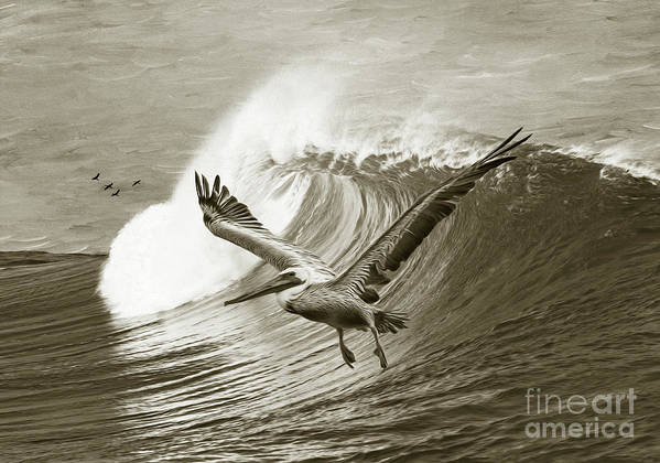 Pelican Art Print featuring the photograph Wings And Waves Bw by Laura D Young