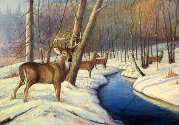 Wildlife Painting - Whitetail Deer Art Print featuring the painting Winter Monarch by Michael Scherer